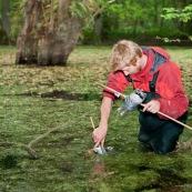 Un ecogarde pose des piËges ‡ tritons en forÍt, dans une mare. Ils est ÈquipÈ avec des waders et immerge un des piËges sous l'eau. Le soir, pour capture des tritons (amphibiens) pendant la nuit. En arriËre plan un saule tÈtard dans la mare. Protection des espËces, suivi des populations, dans le cadre d'un contrat Natura 2000. ModËle : Hubert Dupiczak