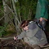 Deux personnes (ecogardes ÈquipÈs de bottes) prospectent une mare ‡ la lampe torche pour trouver des amphibiens (tritons). Recensement de tritons ‡ la lampe torche, de nuit, les tritons sont visibles au fond de la mare. Protection des espËces, suivi des populations, dans le cadre d'un contrat Natura 2000. ModËles : JÈrÙme Bacquaert (accroupi) et Julien Cordier (debout)