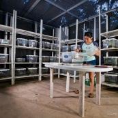 Une scientifique dans son laboratoire au milieu de la jungle, dans le bassin amazonien. Elle étudie une espèce de grenouille en cours de spéciation. Chaque terrarium contient des grenouilles, et différents croisement. La biologiste est en train de donner à manger (des termites) à un groupe de grenouilles.