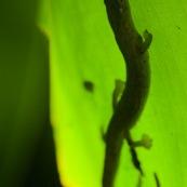 Salamandre sur feuille