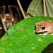 La grenouille et l'araignée
