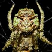 Masque araignée.