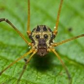 Masque araignée