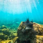 Fond sous-marin en Guadeloupe (environs de basse-terre). Oursins.