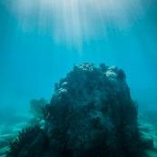 Fond sous-marin en Guadeloupe (environs de basse-terre).
