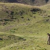 BergËre avec sa canne et son sac ‡ dos, en montagne dans les Alpes, avec son troupeau de brebis. Plan large, la bergËre regarde l'appareil photo. Pas de chien de berger visible.