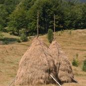 Meules de foin dans la campagne roumaine, ‡ l'ancienne, constituÈ d'un piquet au centre, le foin est amassÈ dessus. D'autres piquets en bois viennent maintenir l'ensemble. La meule se conserve ainsi. Roumanie.