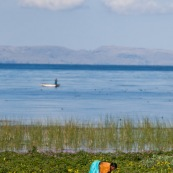 Culture au bord du lac Titicaca, avec femme péruvienne, paysanne, dans son champ. En arriere plan, barque de peche sur le lac avec pecheur. Pérou