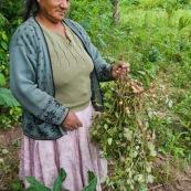 Cacahouettes en Bolivie.