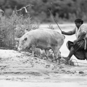 Bolivie passage d'une rivière par une paysanne avec des cochons. Traversée.