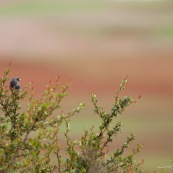 Oiseau au Pérou.