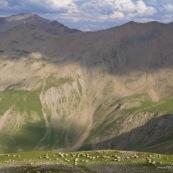 Troupeau de brebis en plein alpage en montagne.