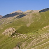 Travail des bergers en montagne dans les alpes. DÈpart du troupeau de brebis, le matin, en moyenne montagne, ciel bleu immaculÈ.
