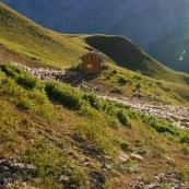 Vue du dessus, cabane de berger le matin, le chien de berger (patou) emmËne le troupeau de brebis vers les paturages. Dans les Alpes, montagnes en arriËre plan.