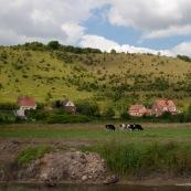 Coteaux de l'Aa en arriËre plan : surnommÈ Ègalement Mont du GÈant. L'Aa est au premier plan. Entre les deux, pature avec des vaches.