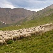 Berger avec son troupeau de brebis en montagne.