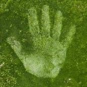 Empreinte de main humaine (droite) dans de la mousse végétale.