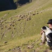 BergËres et leurs chiens, assise pour un court instant de repos. En train d'emmener le troupeau de brebis dans les alpages vierges. Chien de berger. Canne et sac ‡ dos.