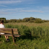 Personne assise sur un banc, observant les marais de Guines, en soirÈe.