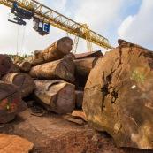Scierie en Guyane. Bois massif. Grumes, troncs. Pont suspendu pour transporter.