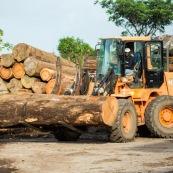 Scierie en Guyane. Bois massif. Grumes, troncs.