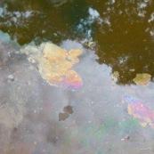 Au sein du parc Amboro, du pétrole  affleure directement en surface. Il est utilisé par les populations locales, qui n'ont pas l'électricité, pour s'eclairer a l'aide de lampes à pétrole improvisees. Ils font donc plusieurs heures de marche pour aler collecter directement ce pétrole arrivant en surface, et polluant naturellement la rivière... Pollution naturelle. Iridescence en surface. Bolivie.
