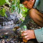 Au sein du parc Amboro, du pétrole  affleure directement en surface. Il est utilisé par les populations locales, qui n'ont pas l'électricité, pour s'eclairer a l'aide de lampes à pétrole improvisees. Ils font donc plusieurs heures de marche pour aler collecter directement ce pétrole arrivant en surface, et polluant naturellement la rivière... Bolivie.