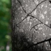 Ombre sur un arbre en forêt