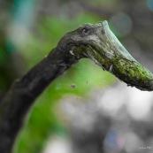 Branche d'arbre en forme de monstre rigolo, serpent, tête
