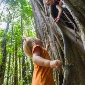 Ficus etrangleur Saül Guyane. Arbre remarquable. Figuier etrangleur. Forêt tropicale. Sentier roche bateau. Avec petite fille et jeune femme.