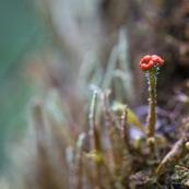 Lichen et organe de reproduction