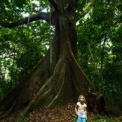 Petite fille et gros arbre - Guyane - Ilet la mère enfant. Foret tropicale amazonienne.  Enfant.