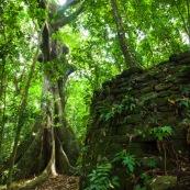 Ilet la mère en Guyane : vestiges ruine construction en forêt.