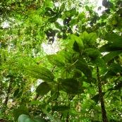 Vue en contre-plongée de la forêt tropicale.