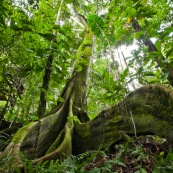 Jungle bolivienne
