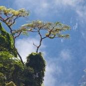 Epiphytes sur arbre