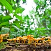 Champignons oranges sur un tronc