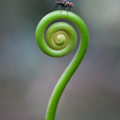 Mouche sur sceptre vegetal