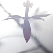 Epidendrum secundum