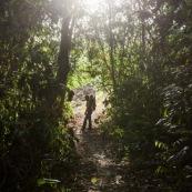 Forêt amazonienne Guyane Saül lianes  foêt tropicale. Soleil. randonneur femme et son bébé sur le dos.