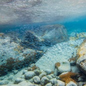 Fonds sous-marin de Guadeloupe. Poissons. Vue sous-marine. Sous l'eau. Plongee. Snorkeling. Banc de poissons. Surface visible. Il pleut.