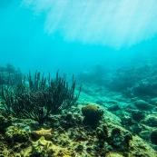 Fonds sous-marin de Guadeloupe. Poissons. Vue sous-marine. Sous l'eau. Plongee. Snorkeling. Corail. Coraux.