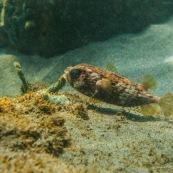 Fonds sous-marin de Guadeloupe. Poissons. Vue sous-marine. Sous l'eau. Plongee. Snorkeling. Corail. Coraux. poisson globe.