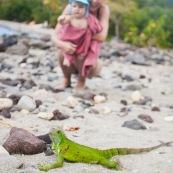 Guadeloupe. Tourisme. Sur la plage au bord de la mer. Femme et son bebe en train d'observer un iguane. Iguana iguana. Iguane vert. Iguane commun. Enfant.