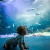 Aquarium de Guadeloupe. Le Gosier. Bebe (enfant) devant un grand aquarium avec des poissons. Tourisme.