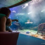Aquarium de Guadeloupe. Le Gosier. Bebe (enfant) devant un grand aquarium avec des poissons. Tourisme.  Avec sa maman.
