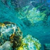 Fonds sous-marin de Guadeloupe. Poissons. Vue sous-marine. Sous l'eau. Plongee. Snorkeling. Coraux.  Vue de la surface avec les reflets des coraux.