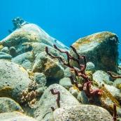 Fonds sous-marin de Guadeloupe. Poissons. Vue sous-marine. Sous l'eau. Plongee. Snorkeling. Coraux.  Corail rouge.