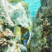 Fonds sous-marin de Guadeloupe. Poissons. Vue sous-marine. Sous l'eau. Plongee. Snorkeling. Coraux.