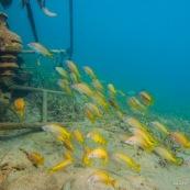 Fonds sous-marin de Guadeloupe. Poissons. Vue sous-marine. Sous l'eau. Plongee. Snorkeling. Epave.